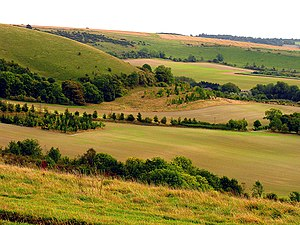 The South Western Slopes of Walbury Hill - geograph.org.uk - 62332.jpg