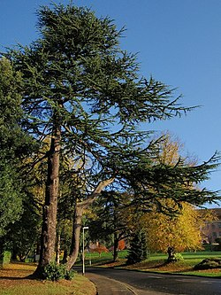 Trees, Exeter University - geograph.org.uk - 1039229.jpg