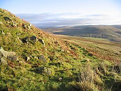 Cheviot Hill countryside - geograph.org.uk - 290451.jpg
