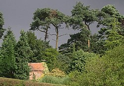 Pine trees against a stormy sky, Salmonby - geograph.org.uk - 44613.jpg