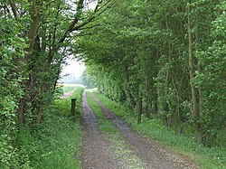 Bridle path. - geograph.org.uk - 174535.jpg